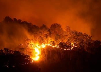 Foresta in fiamme, Credit iStockphoto