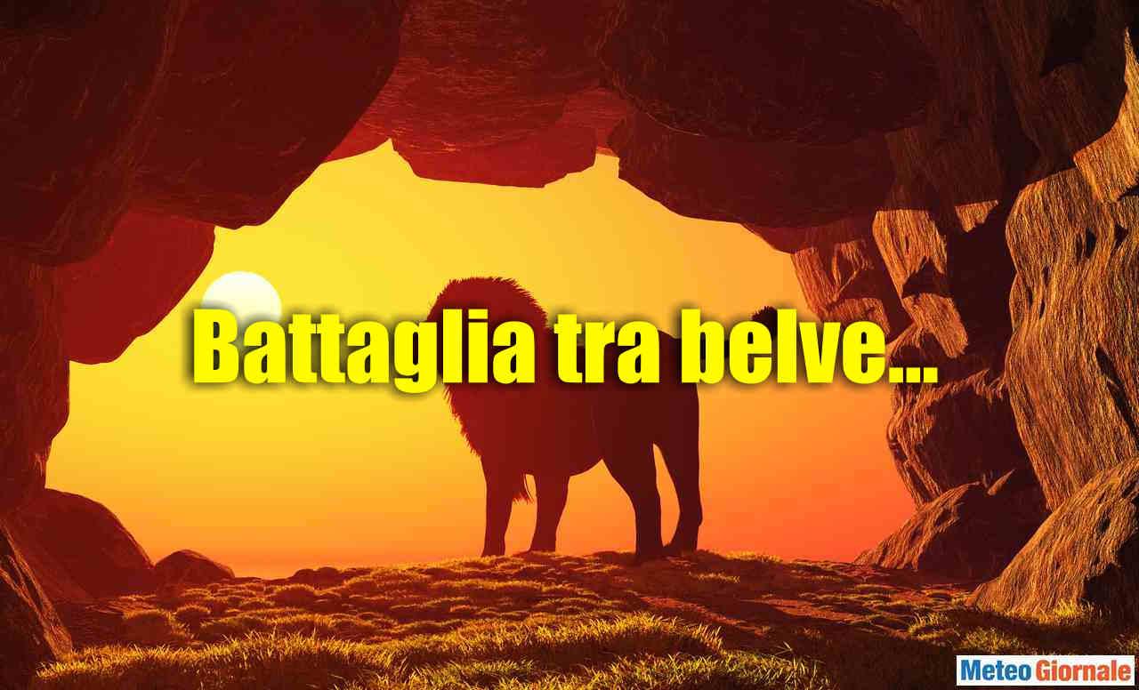 GRANDE BATTAGLIA, l'Africano tirerà fuori gli artigli