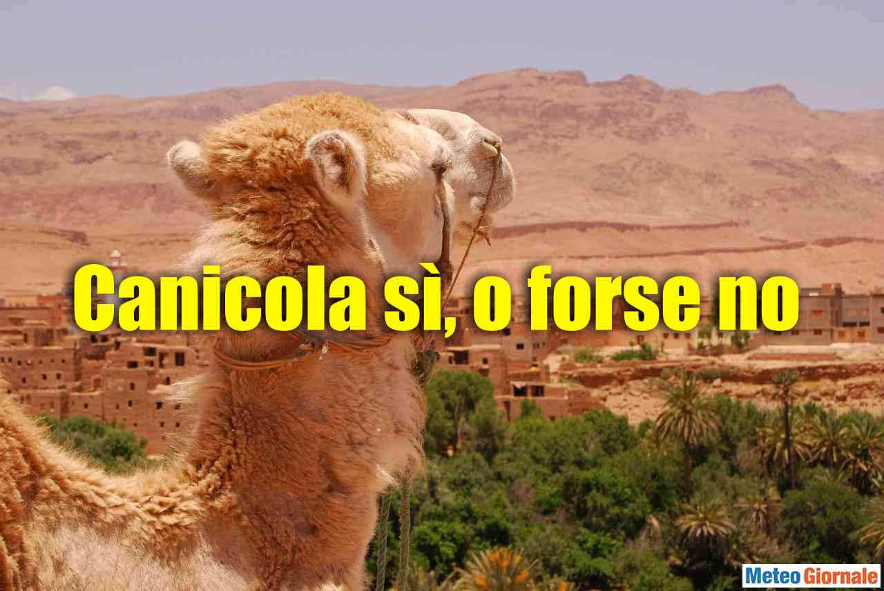 canicola