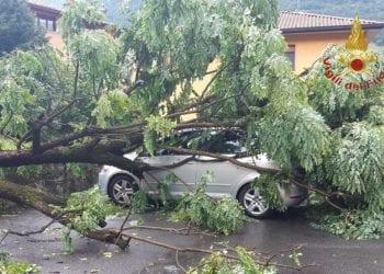 Albero caduto a Sovere sabato 11 luglio, durante il violento temporale