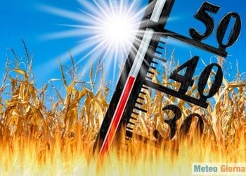 thermometer with high temperature, and dryness in maize field