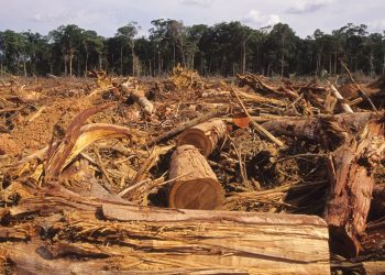 deforastazione amazzonica
