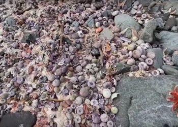disastro ecologico Kamchatka