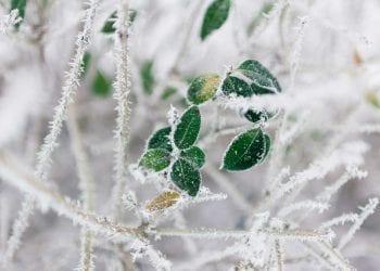 Gelo intenso sull'Italia fino in pianura, con danni ingenti alle coltivazioni nelle campagne