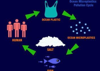 ciclo microplastica 350x250 - Quali sono le origini della comunicazione acustica?