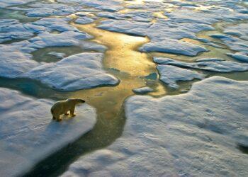 mag1 350x250 - I mammiferi marini dell'Artico sono minacciati da un virus micidiale