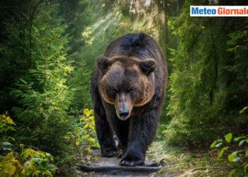 orso artur romania 350x250 - Non laveremo più la biancheria. Si inizierà nello Spazio