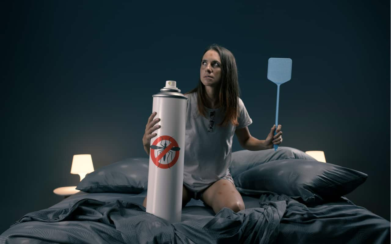 caccia notturna alle zanzare - Nuova arma contro le Zanzare. Le super Zanzare